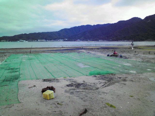 アサリ漁場のネットの張り替え