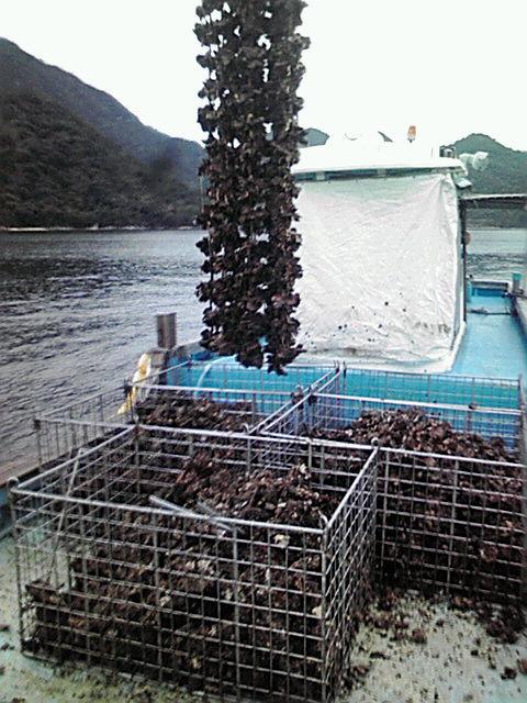 牡蠣打ち開始!